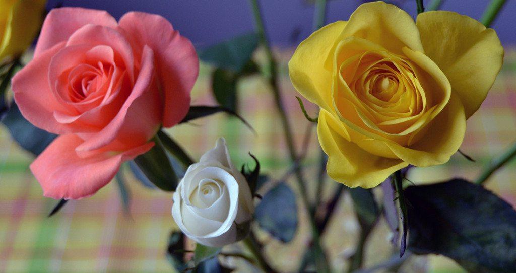 Ruusui