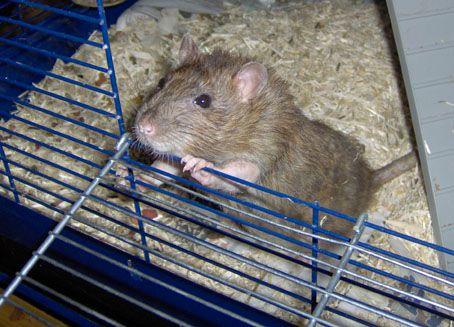 Rotat ovat kovia eläimiä treenaamaan. Kuva: Inge Habex / Wikimedia Commons