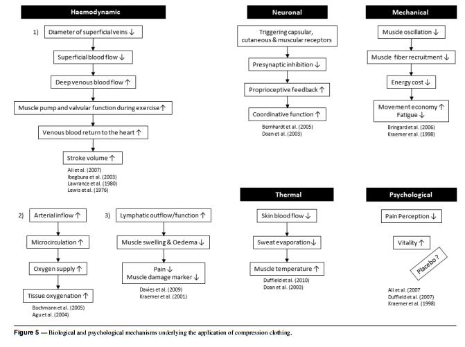 Kompressiovaatteet toimintamekanismit tutkimuksissa